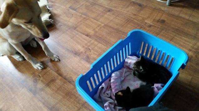 moll&kittens